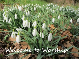 Welcome Snowdrops